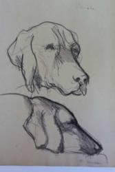 Samu kutya